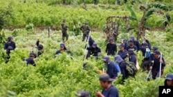 Polisi mengawasi petani memusnahkan tanaman Coca di kota San Miguel, Kolombia (foto: dok).