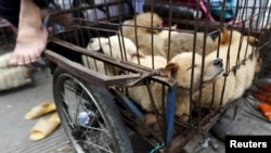 Dogs for sale are kept in a cage in Dashichang dog market on the day of local dog meat festival in Yulin, Guangxi Autonomous Region, June 22, 2015.