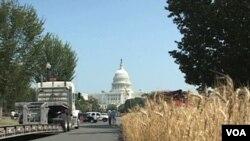 La Asociación Nacional de Productores de Trigo sembro un campo de trigo en el centro de Washington como parte de una campaña para limpiar su imagen.