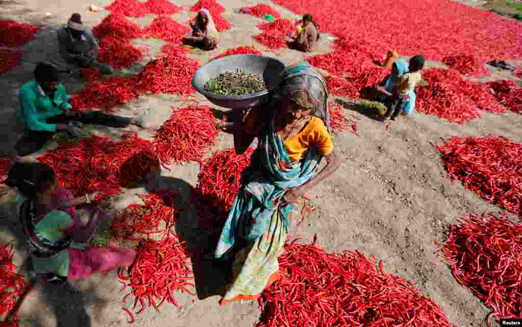 Workers remove stalks from red chilies at a farm on the outskirts of Ahmedabad, India.