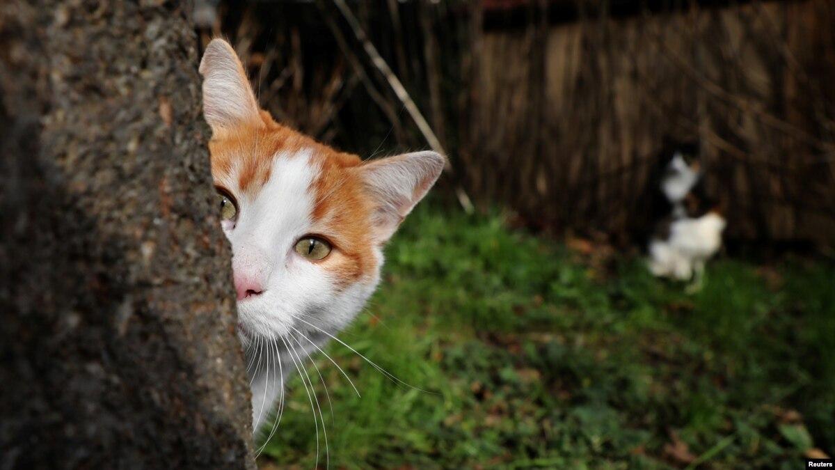 Curiosity Killed the Cat'