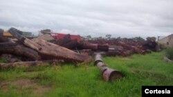 Troncos cortados nos municípios dos Bundas e Luchazes