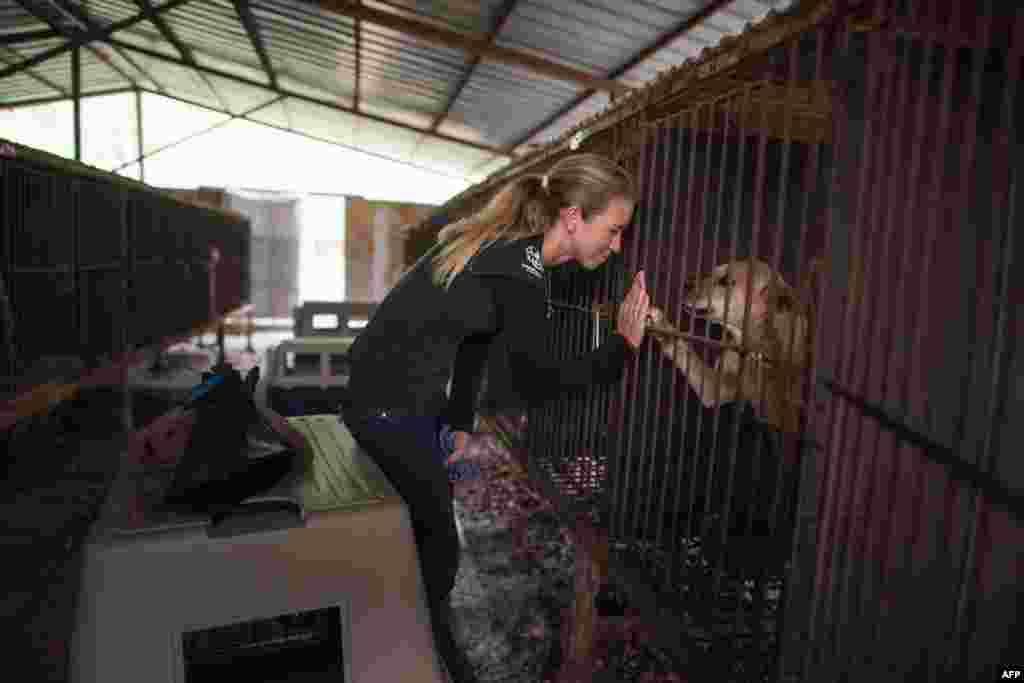 នាង Lola Webber នៃអង្គការ Humane Society International (HSI) ផ្តល់ការរំងាប់អារម្មណ៍ដល់សុនខក្នុងទ្រុងមួយនៅអំឡុងពេលព្រឹត្តិការណ៍សង្រ្គោះដែលត្រូវបានចុះផ្សាយជាសាធារណៈពាក់ព័ន្ធនឹងការបិទកសិដ្ឋានចិញ្ចឹមឆ្កែមួយ ដែលត្រូវបានរៀបចំឡើងដោយអង្គការ HSIនៅក្រុង Wonju ភាគអាគ្នេយ៍ក្រុងសេអ៊ូល ប្រទេសកូរ៉េខាងត្បូង។ សុនខនៅក្នុងកសិដ្ឋាននោះនឹងត្រូវបញ្ជូនទៅ សហរដ្ឋអាមេរិក។ កសិដ្ឋានចិញ្ចឹមឆ្កែនោះជាកសិដ្ឋានមួយនៅក្នុងចំណោមកសិដ្ឋានរាប់ពាន់ ដែលបានចិញ្ចឹមឆ្កែសម្រាប់ការទទួលទាន ហើយសុនខត្រូវបានដាក់នៅក្នុងទ្រុងចាប់តាំងពីថ្ងៃកើតរហូតដល់ថ្ងៃសម្លាប់យកសាច់។