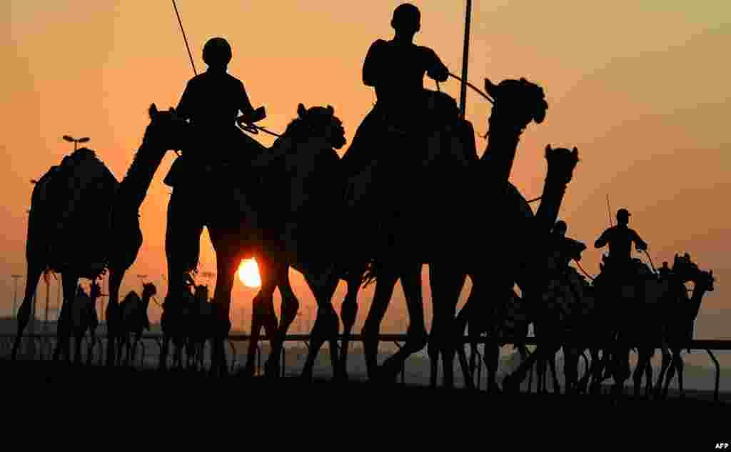 مسابقات شترسواری در امارات متحده عربی