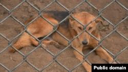 美國參議院把殘害動物列為聯邦重罪。