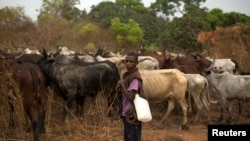 FILE - A herder is seen standing with his cattle near the town of Bouar, Central African Republic, March 9, 2014.