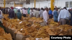 Tobacco sales in Harare