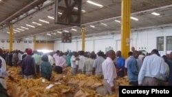 Tobacco sales in Harare