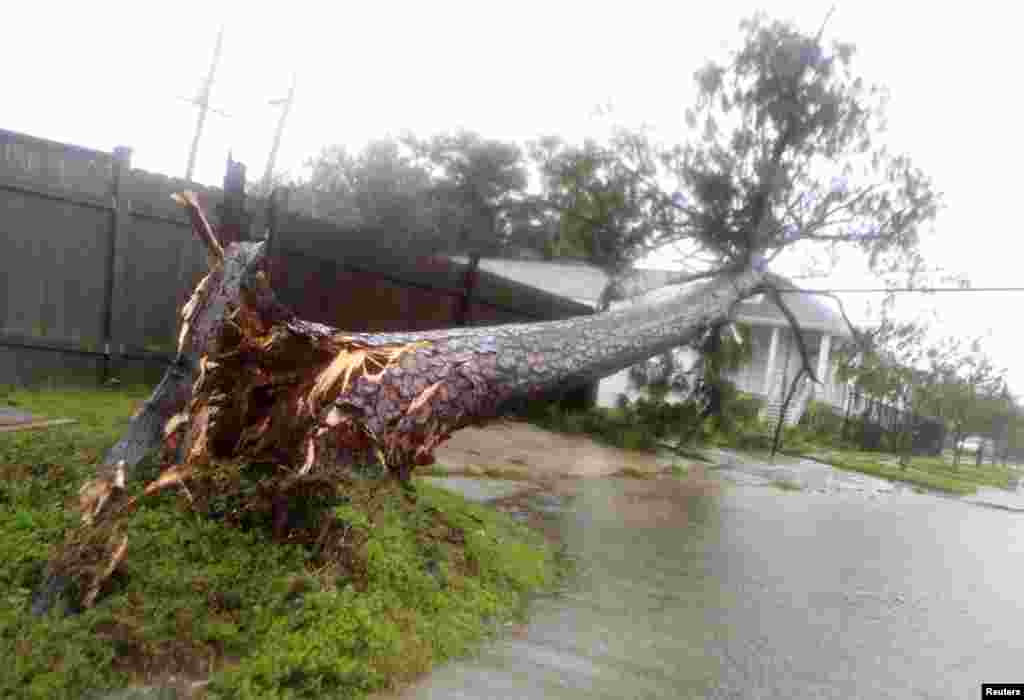 A blown over tree sits on power lines amidst strong wind and rain during Hurricane Isaac in New Orleans, Louisiana August 29, 2012.