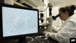 ایمبرائنک اسٹیم سیلز پر تجربات