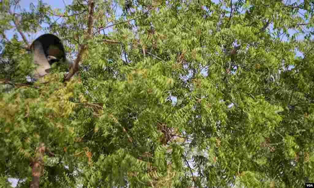 درخت پر لگا لاوٴڈ اسپیکر جس پر باآواز و بلند دعائیں اور قرة جاری رہتی ہے