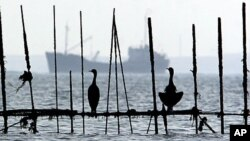 Sea birds sit on fishing traps set up near the shore off Muharraq, Bahrain, as ships pass through the Persian Gulf (file photo)