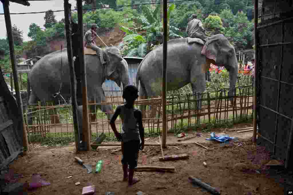 A boy watches elephants arrive to be used in an eviction drive inside Amchang Wildlife Sanctuary on the outskirts of Gauhati, India.