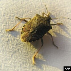 With Bedbugs, Some People See Pests, Others See Profits