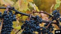 Nghề rượu vang ở Virginia nở rộ