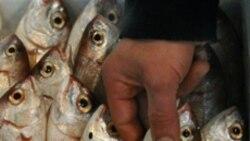 Crise financeira afecta sector pesqueiro no Namibe - 2:03