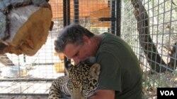 Dale Anderson bermain dengan Murado, seekor jaguar yang dia pelihara di Cat Haven.