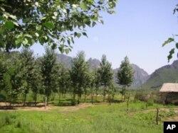 中国农村土地