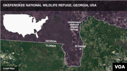 Okefenokee National Wildlife Refuge, Georgia, USA