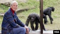 Jane Giidall mtaalamu wa wanyama wanaofanana akiwa katika Taronga Zoo Sydney Australia
