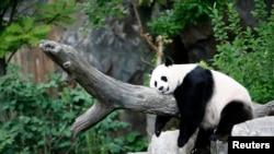 Panda raksasa Mei Xiang sedang tidur siang di Kebun Binatang Nasional di Washington pada 23 Agustus 2007. (Foto: dok.)