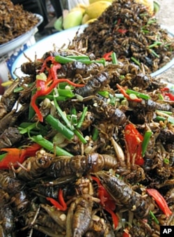 Insects are eaten widely in Cambodia. The UN hopes to fight child malnutrition in Laos with nutrient-packed bugs.
