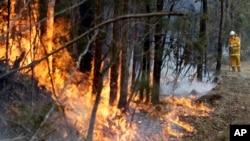 Un bombero logra controlar un incendio cerca de Tomerong, Australia, el miércoles, 8 de enero de 2020.