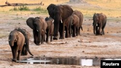 FILE - A herd of elephants walk past a watering hole in Hwange National Park, Zimbabwe.