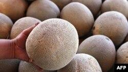 15 người đã chết và 84 người khác bị bệnh sau khi ăn dưa vàng cantaloupe nhiễm vi khuẩn Listeria