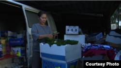 A scene of Kavich Neang's documentary film 'Lim Vy' when Ms. Vy works at home preparing vegetables the day before she sells it at Sunday Market in Brisbane, Australia. (Courtesy photo/Kavich Neang)