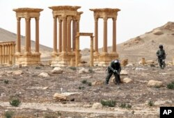 Russian serviceman check for mines in the Palmyra ancient ruins, Syria, in this photo provided by Russian Defense Ministry press service, April 8, 2016.