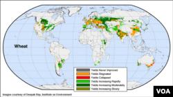 Bản đồ về sản lượng lúa mì trên thế giới