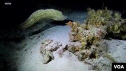 گہرے اور تاریک سمندروں کی تہہ میں بھی جاندار موجود ہیں جو تاریکی میں دیکھنے کے لیے اپنی روشنی خود پیدا کرتے ہیں۔