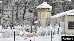 지난해 1월 일본 중부 기후현 야마가타에서 보건 관계자들이 조류독감이 발생한 농장의 닭을 살처분하고 있다. (자료사진)