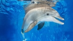 "Winter, star of ""Dolphin Tale"""