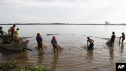 Cambodian fishermen move their fishing net from the Mekong River as they catch fish on the outskirts of Phnom Penh.