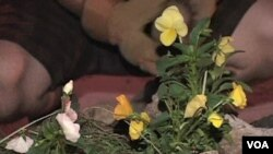 Seorang gerilyawan berkebun sedang menanam bunga di salah satu sudut kota Washington DC.