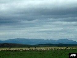 红军当年走过的若尔盖湿地如今牛羊成群