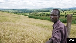 Experts say sub-Saharan Africa can be a major wheat producer. Credit: CIMMYT