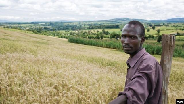 Experts say sub-Saharan Africa can be a major wheat producer. Credit: CIMMYT