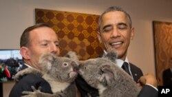 美國總統奧巴馬(右)去年訪問澳大利亞時,與澳大利亞總理阿博特(左)抱起瀕臨絕種的樹熊。