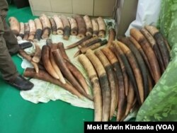 Large quantities of elephant tusks and scales from pangolins were seized in Douala, Cameroon.
