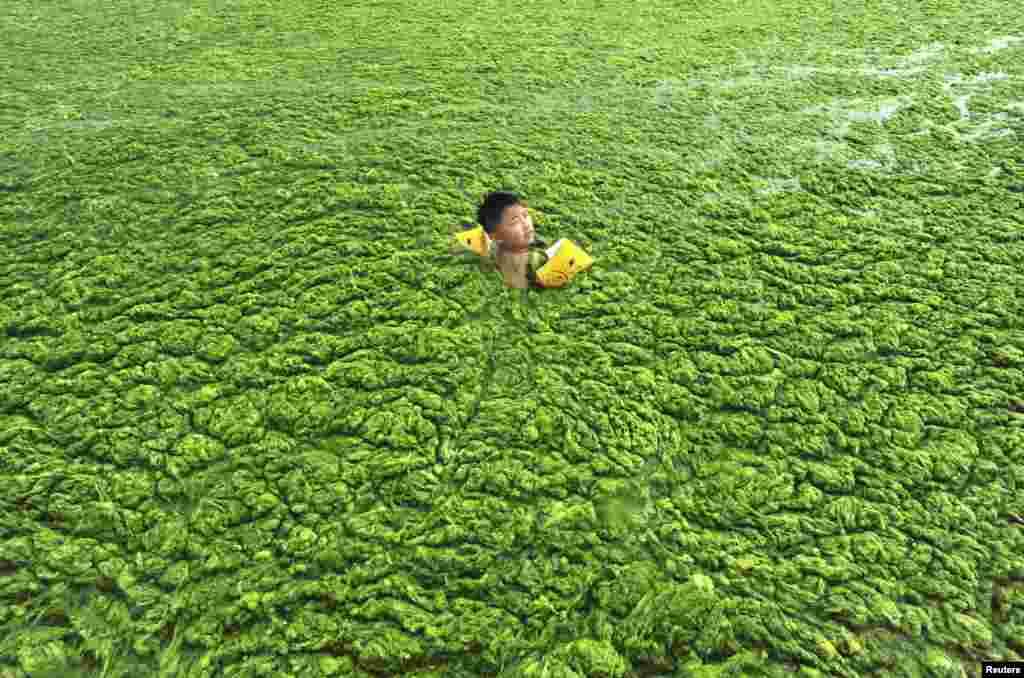 Một cậu bé bơi trong biển đầy tảo xanh ở Thanh Đảo, tỉnh Sơn Đông ngày 15 tháng bảy năm 2011.