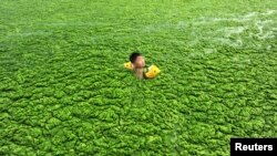 Các vụ bùng phát tảo xanh tại Trung Quốc