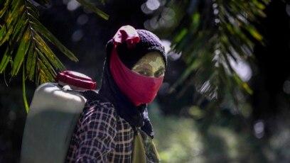 Seorang pekerja perempuan tengah menggendong alat penyemprot pestisida di punggungnya di perkebunan kelapa sawit di Sumatera, 8 September 2018. Beberapa pekerja menggunakan pasta kuning yang terbuat dari bubuk beras dan akar lokal sebagai tabir surya. (Foto: AP / Binsar Bakkara)