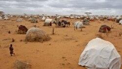 Buufata Baqataa Dadaab'tti Nama Jaharratti Kooronaan Argameera; Baqattoonni Oromoo Achi Jiraatan Maal Keessa Jiru?