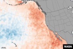 A NASA image of the warm 'blob' of water that appeared in the NE Pacific in 2013.