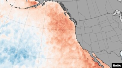 Heat Waves Deadly On Land And Sea
