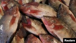 FILE - Fish are seen in a fish market near the canal of Port Said, Egypt, March 18, 2018.