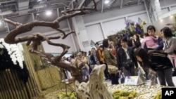 ຜູ້ເຂົ້າຊົມງານກໍາລັງເດີນຊົມການວາງສະແດງຂອງງານ Taipei International Flora Expo ທີ່ຈະດໍາເນີນໄປເປັນເວລາ 6 ເດືອນ ຈົນຮອດວັນທີ 25 ເດືອນ ເມສາ ປີ 2011 ທີ່ເປີດຂຶ້ນຢູ່ ນະຄອນຫລວງໄທເປ ຂອງໄຕ້ຫວັນ ໃນວັນທີ 6 ພະຈິກ 2010 ທີ່ຜ່ານມານີ້.